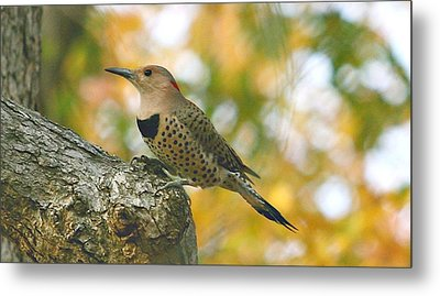 Flicker Metal Print by Debbie Sikes