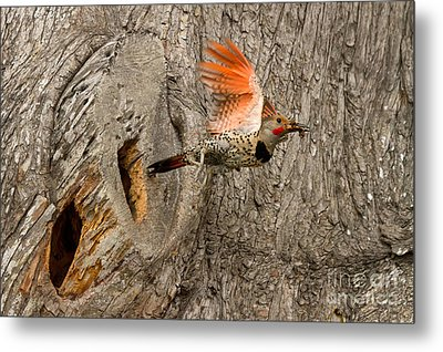 Flicker Flight Metal Print