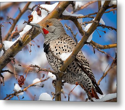 Flicker In Snow Metal Print