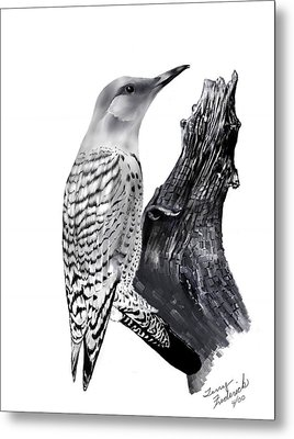 Metal Print featuring the drawing Flicker by Terry Frederick