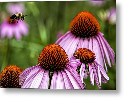 Flight Of The Honey Bee Metal Print by John Crothers