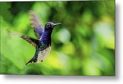 Metal Print featuring the photograph Flight Of The Hummingbird by Rob Tullis