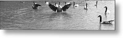 Flight Metal Print by Sarah E Kohara