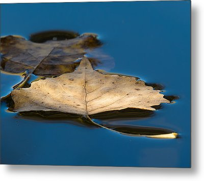 Floating Metal Print by Beverly Parks