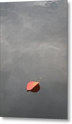 Floating Jewel Metal Print by Jake Barbour