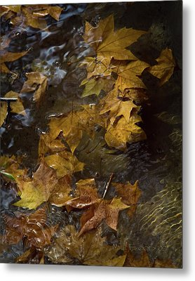 Metal Print featuring the photograph Floating Leaves - Fall In Rome by Michael Flood