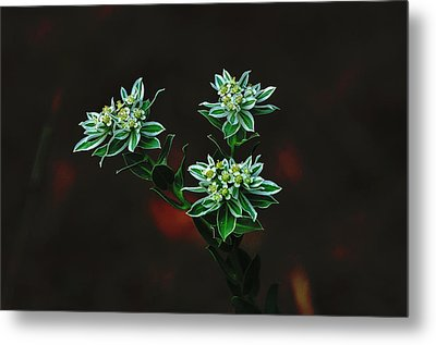 Metal Print featuring the photograph Floating Petals by John Johnson