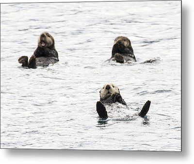 Floating Sea Otters Metal Print by Saya Studios