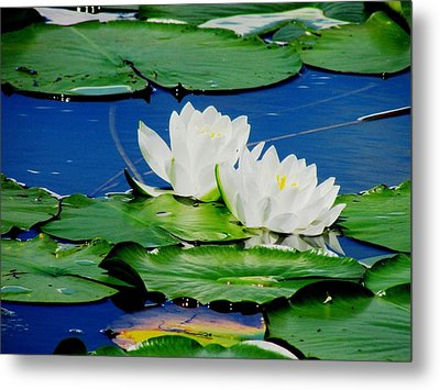 Floating Metal Print by Will Boutin Photos