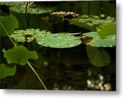Metal Print featuring the photograph Floating World 1 - Lily Pads  by Jane Eleanor Nicholas
