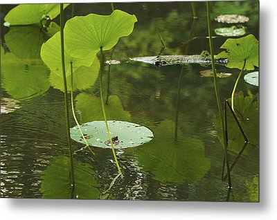Metal Print featuring the photograph Floating World #2 - Lotus Leaves Art Print by Jane Eleanor Nicholas