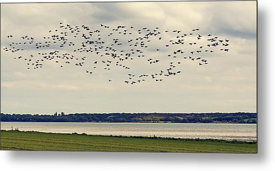 Flock Of Birds Metal Print by Svetlana Sewell