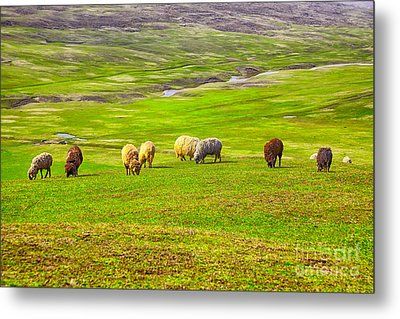Flock Of Sheep Metal Print by Gabriela Insuratelu