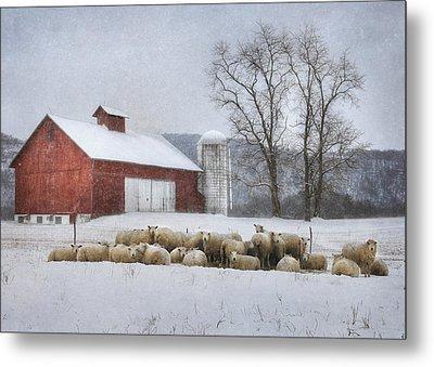 Flock Of Sheep Metal Print by Lori Deiter