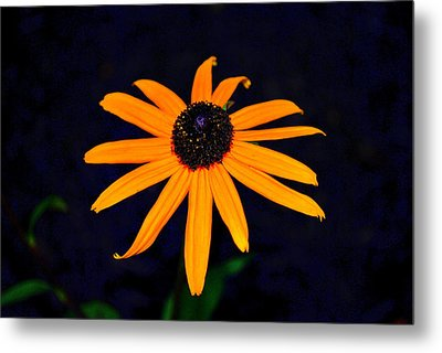 Metal Print featuring the photograph Flora 4 by Mary Beth Landis