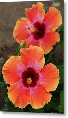 Metal Print featuring the photograph Floral Beauty 2  by Christy Pooschke