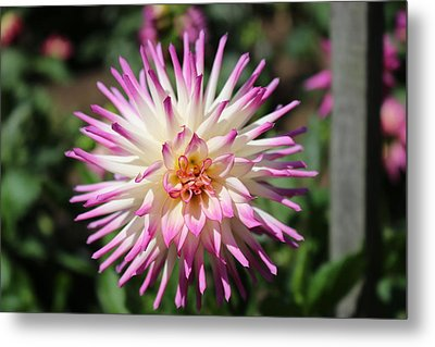 Metal Print featuring the photograph Floral Beauty 3  by Christy Pooschke