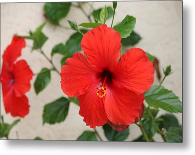 Metal Print featuring the photograph Floral Beauty  by Christy Pooschke