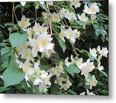 Metal Print featuring the photograph Floral Cascade by Pema Hou