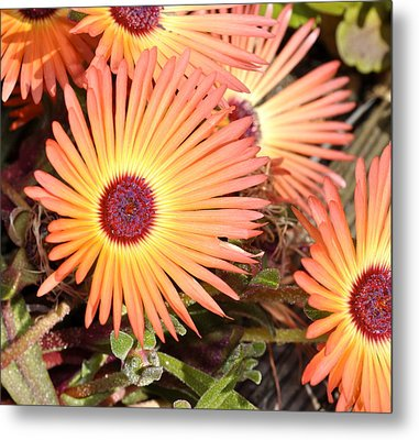 Metal Print featuring the photograph Floral by Cathy Mahnke