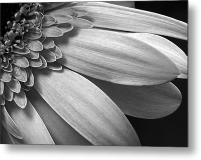 Metal Print featuring the photograph Floral Detail by Dawn Currie