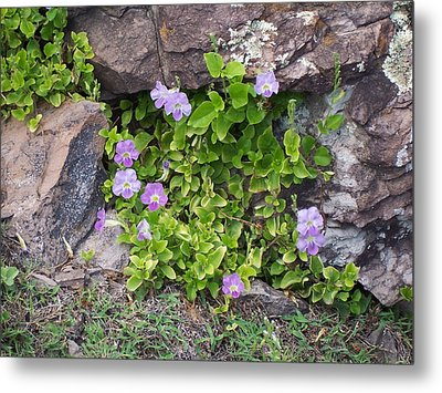 Metal Print featuring the photograph Floral Relief by Sheila Byers