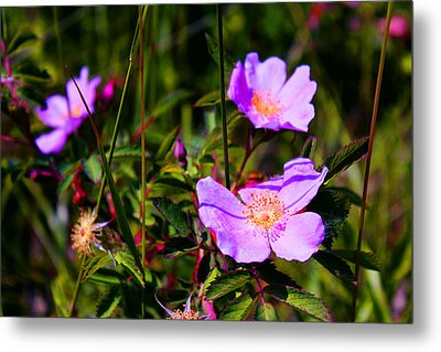 Floral Saturation Metal Print by Sheryl Burns