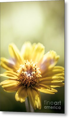 Floral Sunlight Metal Print by Jorgo Photography - Wall Art Gallery