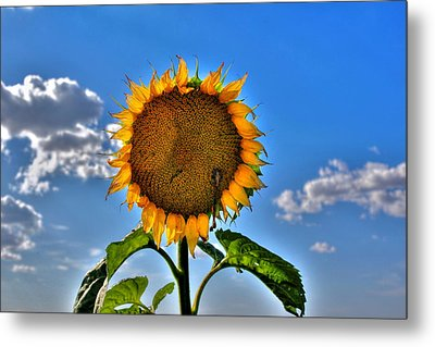 Floral Sunshine Metal Print by Larry Trupp
