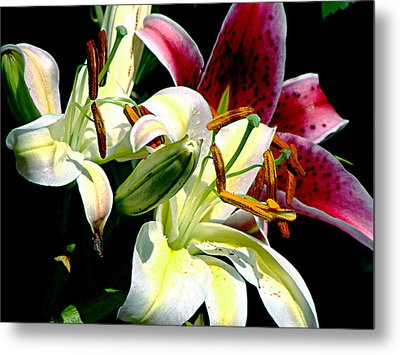 Metal Print featuring the photograph Florals In Contrast by Ira Shander