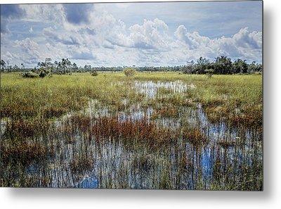 florida Everglades 0177 Metal Print by Rudy Umans
