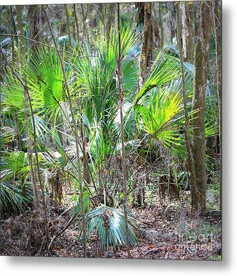 Florida Palmetto Bush Metal Print by Carol Groenen