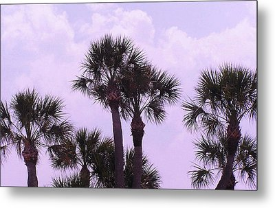 Florida Palms Metal Print by John Wartman