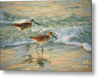 Florida Sandpiper Dawn Metal Print