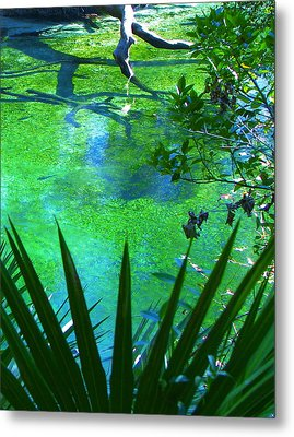 Florida Swamp With Driftwood Metal Print