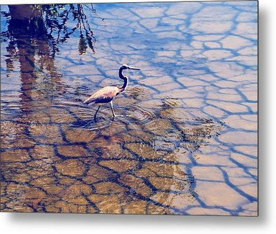 Metal Print featuring the photograph Florida Wetlands Wading Heron by David Mckinney