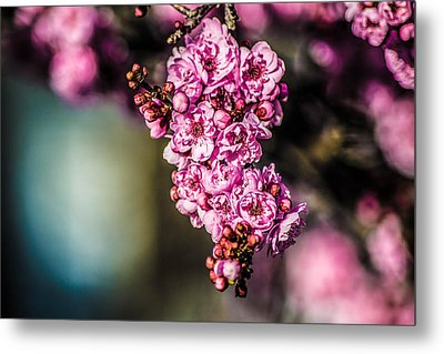 Metal Print featuring the photograph Flourishing In Pink by Naomi Burgess