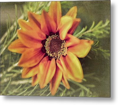 Flower Beauty I Metal Print by Marco Oliveira