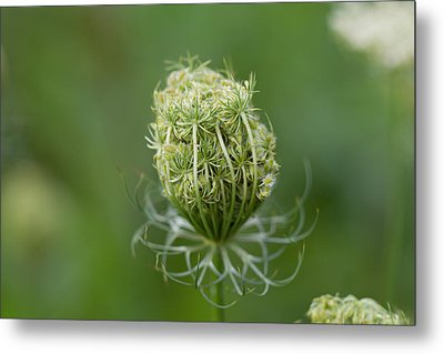 Metal Print featuring the photograph Flower Bud by John Hoey