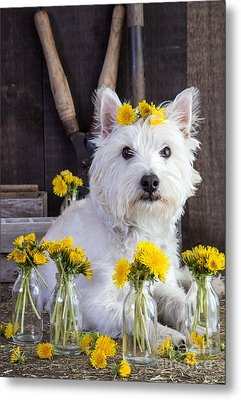 Flower Child Metal Print by Edward Fielding