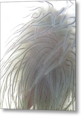Metal Print featuring the photograph Floral Feathers by Ramona Johnston