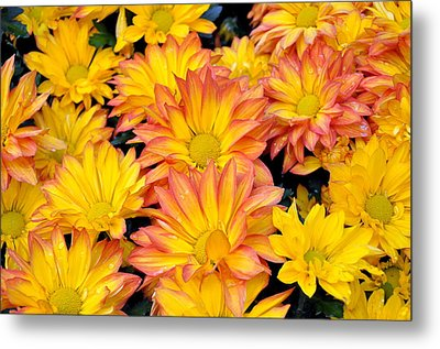 Metal Print featuring the photograph Flower  by Gandz Photography
