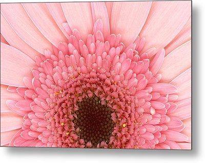 Flower - I Love Pink Metal Print by Mike Savad