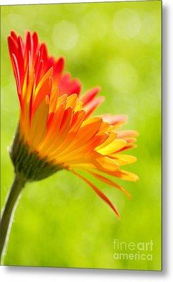 Flower In The Sunshine - Orange Green Metal Print by Natalie Kinnear