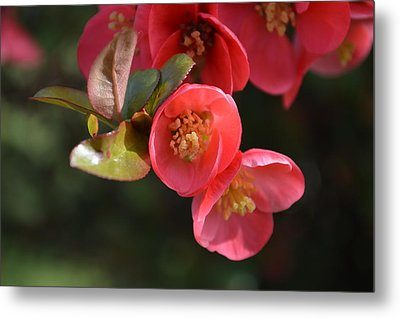 Flower Love Metal Print by Sheldon Blackwell
