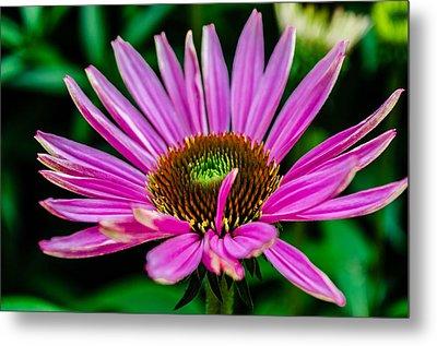 Flower Macro 3 Metal Print by Alan Marlowe
