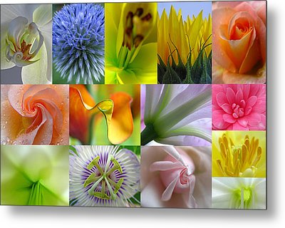 Flower Macro Photography Metal Print