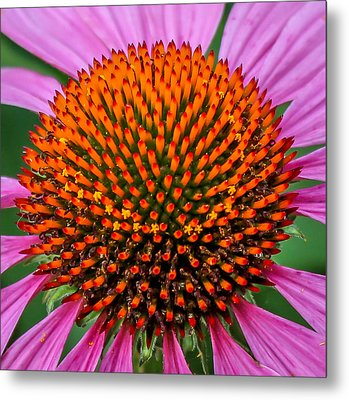 Metal Print featuring the photograph Flower Macro  by Trace Kittrell