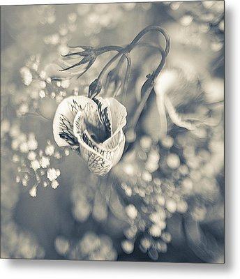 Flower Metal Print by Mark-Meir Paluksht