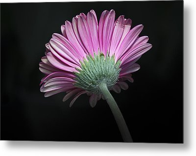 Metal Print featuring the photograph Flower by Nick Mares